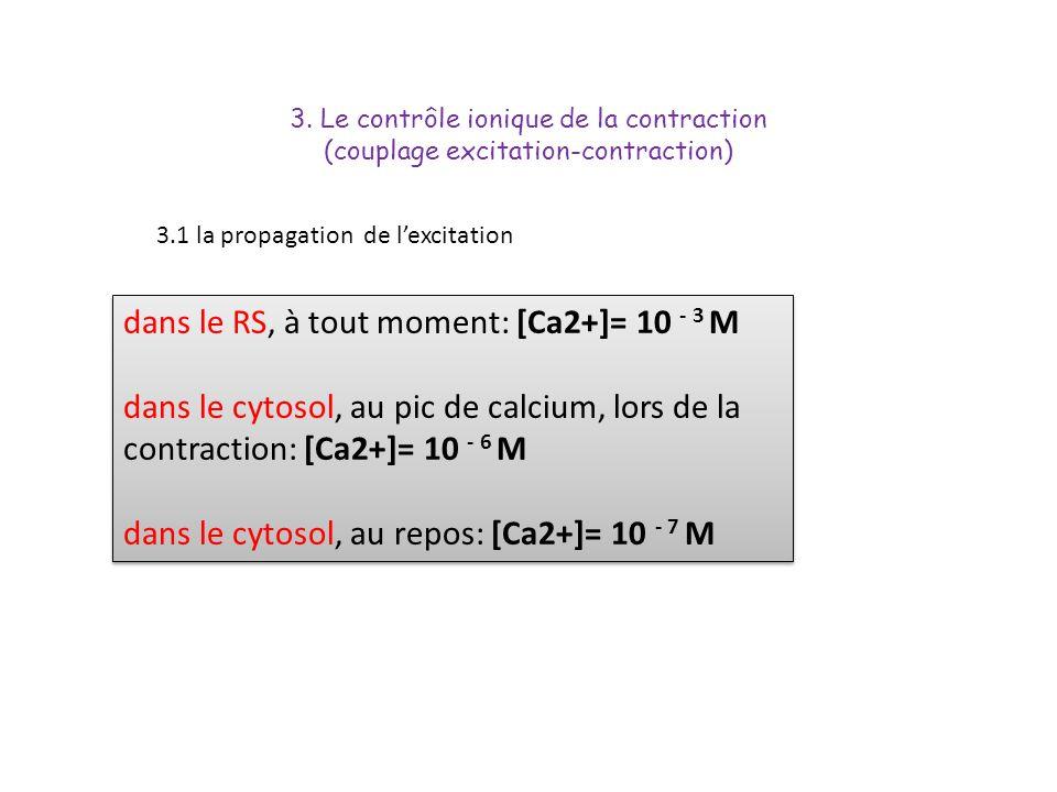 dans le RS, à tout moment: [Ca2+]= 10 - 3 M